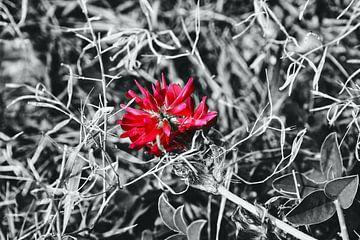 Magie florale sur Jacob von Sternberg