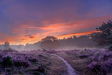 Pad in de mist van Koen Boelrijk Photography