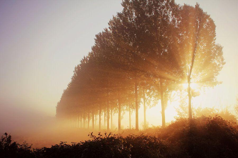 morningrise...... van Els Fonteine
