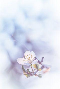 Eine Berührung von der Blüte von Arja Schrijver Fotografie