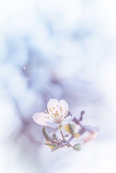 Een vleugje bloesem van Arja Schrijver Fotografie
