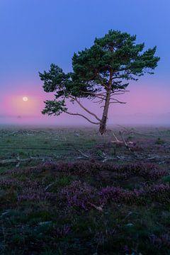 Paarse ochtend met maan op de Hilversumse Heide van Michiel Dros