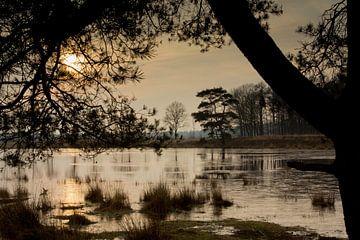 Ven in het Mandeveld te Bakkeveen (Friesland) van Meindert van Dijk