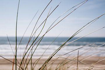 Wuivend gras bij Zandvoort aan zee van Evelien Lodewijks