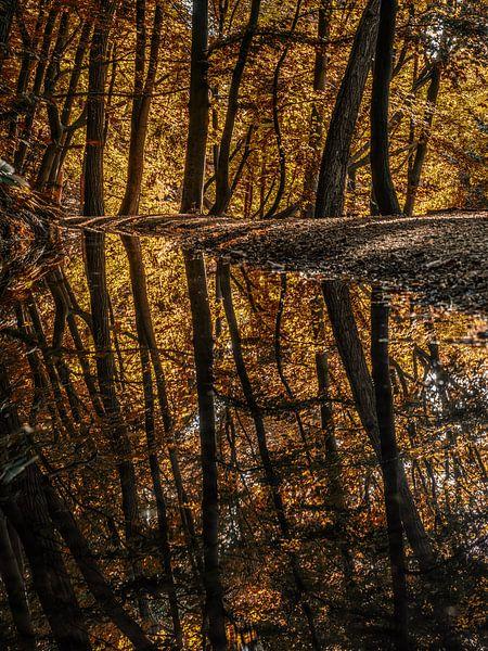 Reflections van Lex Schulte