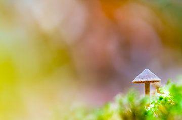 Pilz im Wald von Marcel Derweduwen