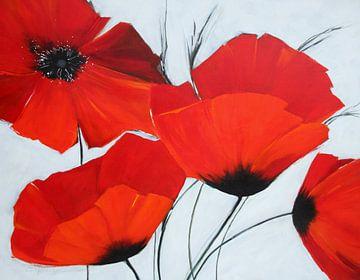 Fleur préférée : pavot rouge sur Claudia Neubauer