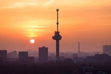 Rotterdam Dreams