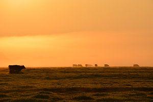 Koeien in weiland in de ochtend van