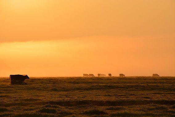Koeien in weiland in de ochtend