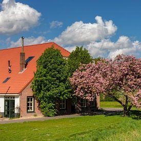 Boerderij met prunus in bloei van Bram van Broekhoven