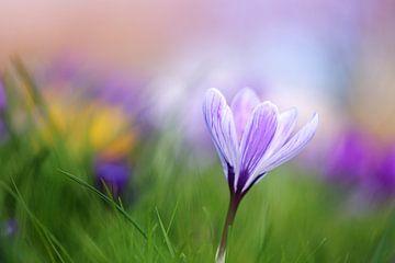Spring Palette von LHJB Photography