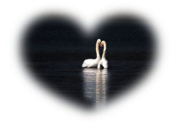 Zwaan Lovers van Renate Knapp