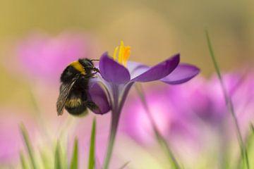 Frohliche farbe im Frühling von Birgitte Bergman