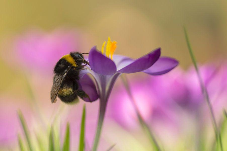 De vrolijke kleuren van de lente 2