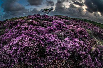 Heide bij Bergen 1 van Peter Heins