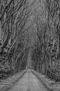 Laan in de winter (Rulstraat, Megen, Noord-Brabant) van