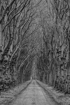 Laan in de winter (Rulstraat, Megen, Noord-Brabant) von Wouter Bos
