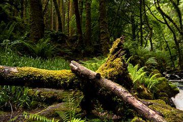 Märchenwald in Irland von elma maaskant