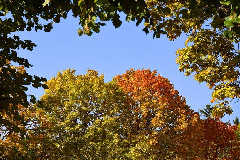 Herbstfarben von Markus Jerko