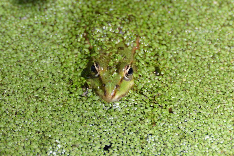 ogen in het groen von Pascal Engelbarts