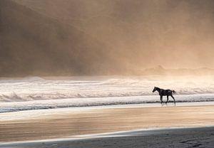 Paard in de zee bij zonsondergang van