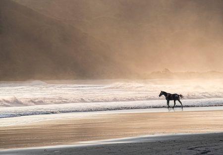 Pferderennen im Meer bei Sonnenuntergang