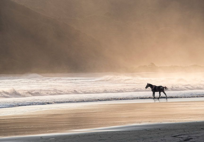 Paard in de zee bij zonsondergang van Marcel van Balken