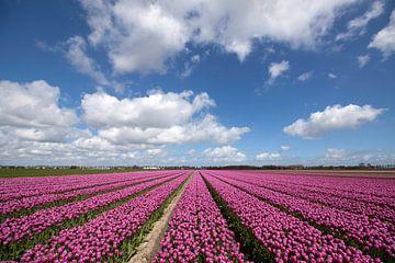 Typisch nederlands beeld met bloeienden tulpen van Maurice de vries