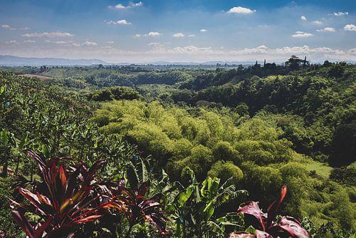 Koffieplantages Colombia van Ronne Vinkx