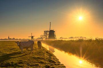 Mühle und Kühe in Streefkerk von Richard Nell