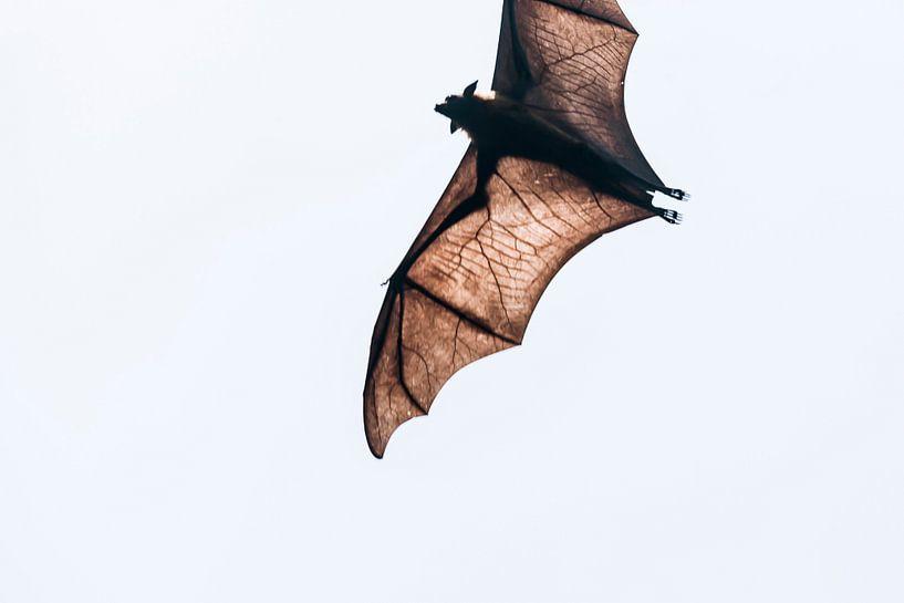 Bat Wings kleur van Rebecca Gruppen