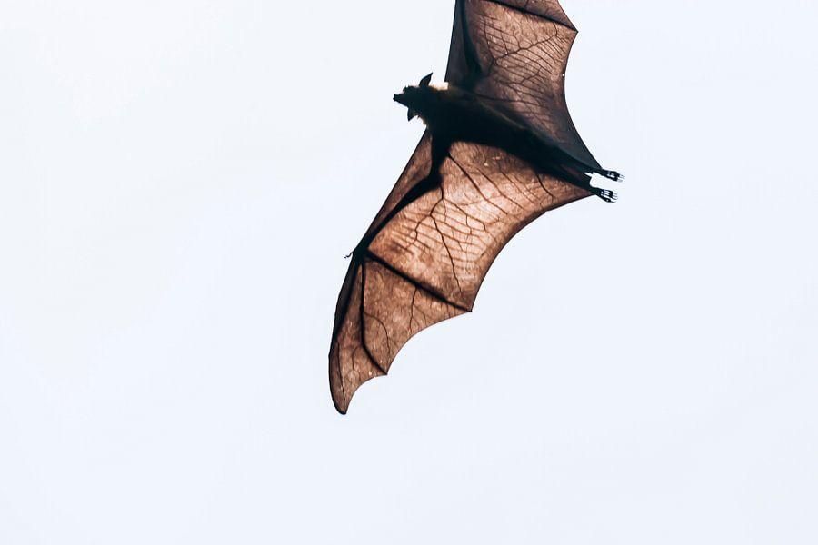 Bat Wings kleur