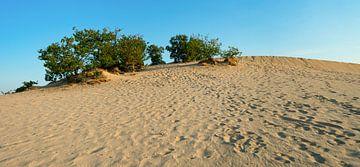 Loonse en Drunense duinen van Domenique van der Horst