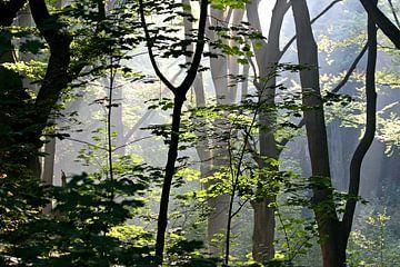 Zie de zon schijnt door de bomen van Ties van Veelen
