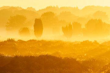 De heide in geel von Karla Leeftink