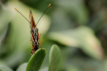 Aandachtige vlinder. van