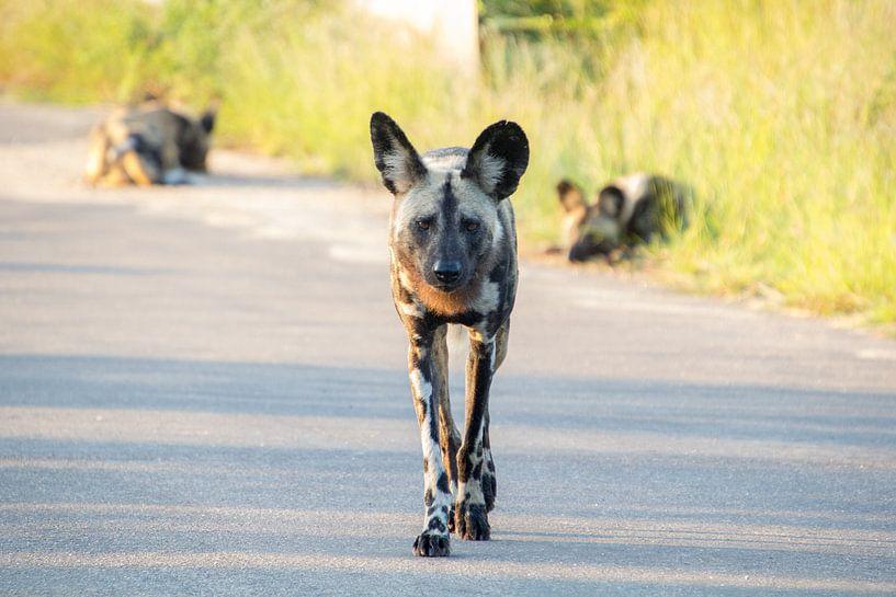Wilde hond van Marijke Arends-Meiring