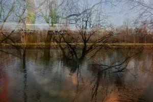 Bomen in rivier