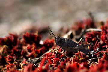 Bloody Grasshopper van Bart Vancamp