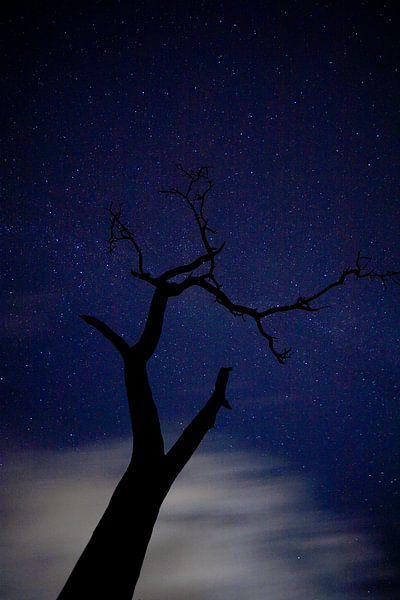 Nachtboom van joas wilzing