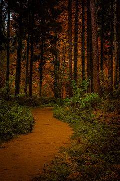 Sentier forestier sur Remko Ongersma