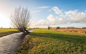 Holländische Polderlandschaft mit Kopfweide von Ruud Morijn