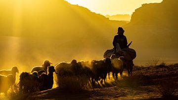 Schapenhoeder met hond en schapen in Wadi Rum, Jordanië van Jessica Lokker
