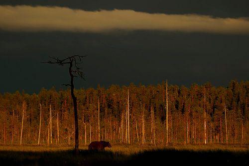 Bruine beer na een onweersbui van