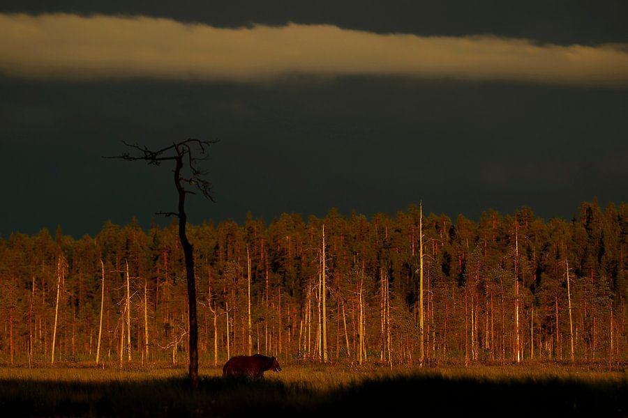 Bruine beer na een onweersbui