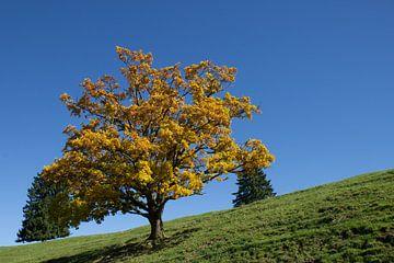 Herbstbaum auf Wiese von