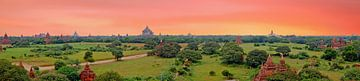Panorama van buddhist tempels in Bagan , Myanmar bij zonsondergang van Nisangha Masselink