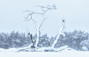 Verstild in sneeuw