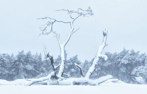 Verstild in sneeuw van
